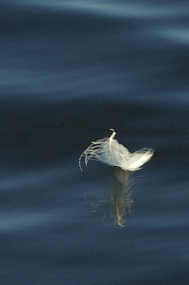 feather10_12_2010.jpg
