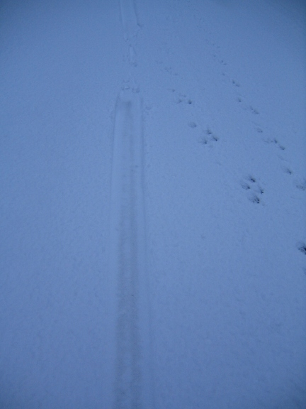 ottertracks11_05_07.jpg